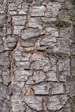 korowatego formata surowy tekstury drzewo Zdjęcie Stock