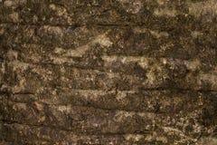 Korowatej tekstury Drewniana tekstura dla tło przestrzeni dla teksta Obrazy Royalty Free