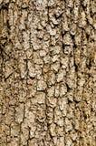 korowaty drewniany Obraz Royalty Free