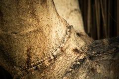 Korowaty drewno Obrazy Stock