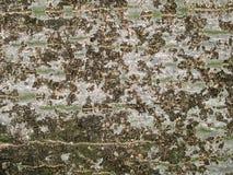 Korowaty drzewa tło Obraz Royalty Free