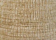 korowaty drzewko palmowe Obrazy Stock