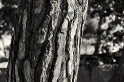 Korowaty drzewny bagażnik Zdjęcie Stock