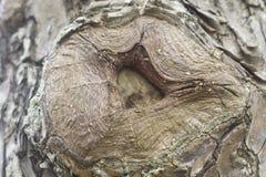korowaty drzewo Obraz Royalty Free