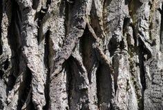 korowaty drzewo Zdjęcia Stock