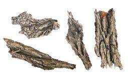 Korowaty drzewo odizolowywający ilustracja wektor