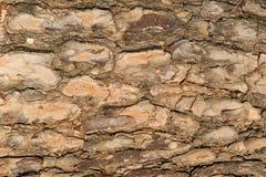 korowaty tła drzewo Zdjęcia Stock