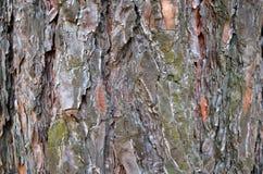 Korowaty tło, drzewny tło Obrazy Stock