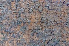 Korowaty tekstury tło Obraz Royalty Free