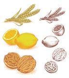 Korrel, citroenen, okkernoten Stock Afbeeldingen