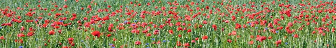Korrel en bloem Stock Afbeeldingen