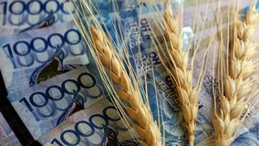 Korrel en geld Drie tarwehoofden en veertig duizend KZT Het concept een dure oogst, corruptie op het gebied van agricu stock foto's