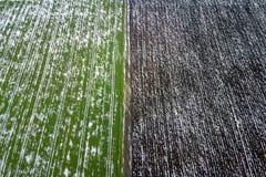 Korrelgebied door sneeuw in de lente Luchtmening die wordt behandeld royalty-vrije stock foto's
