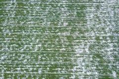 Korrelgebied door sneeuw in de lente Luchtmening die wordt behandeld royalty-vrije stock fotografie