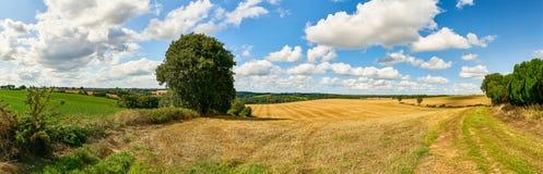 Korrelgebied na oogst in de zomer als panorama stock foto's