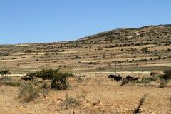 Korrelgebieden en landbouwbedrijven in Ethiopië stock afbeelding
