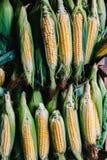 Korrels op maïskolven in stapel stock foto