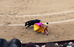 Korrida in Madrid. Matador teases bull with muleta Stock Photos