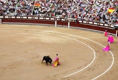 Korrida in Madrid. Matador teases bull with muleta Royalty Free Stock Images