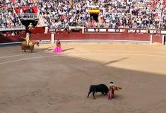 Korrida in Madrid. Matador teases bull with muleta Royalty Free Stock Image