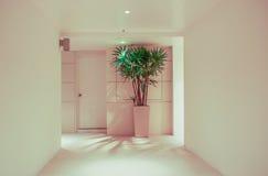 Korridor, houseplant och dörr Fotografering för Bildbyråer