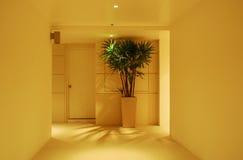 Korridor, houseplant och dörr Royaltyfri Fotografi
