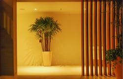 Korridor, houseplant och trävägg Arkivfoto