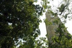 korridoren för den Australien stadsklockan lokaliserade den västra perth torntownen Arkivbilder