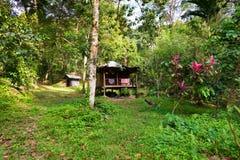 Korrugerat järn och trä förlägga i barack i den tropiska solbelysta djungeln Royaltyfri Foto