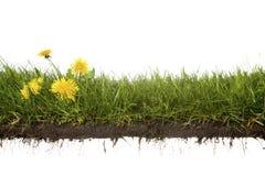 Kors-snitt av gräs med blommor Royaltyfri Foto