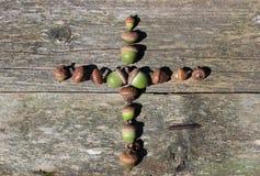 Kors som göras av ekollonar Royaltyfri Bild