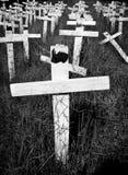 Kors som planteras i minne av att tjuvjaga för noshörning royaltyfri bild