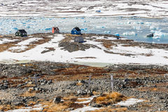 kors tre Övergiven kyrkogård i Qoornoq - tidigare fiskare Royaltyfria Foton