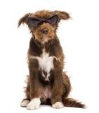 Korsa, 5 gammala månader, sammanträde och ha på sigsolglasögon Arkivbild