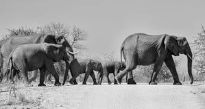 Korsa f?r elefanter arkivbild