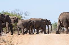 Korsa f?r elefanter royaltyfri foto