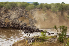 Korsa till andra sidan africa kenya mara masaiflod Royaltyfria Foton