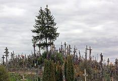 korsar kullen lithuania royaltyfri foto
