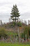korsar kullen lithuania royaltyfria foton