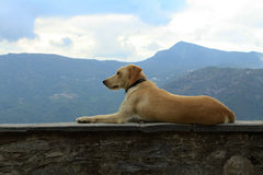 Korsika Stockbilder