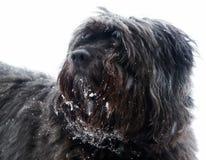 korsninghundstående Royaltyfria Foton