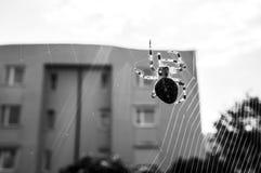 Korsspindel på rengöringsduk Arkivfoton