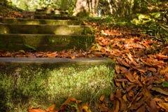 Korstmos en mos behandelde stappen in een bosweg Stock Foto's