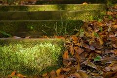 Korstmos en mos behandelde stappen in een bosweg Stock Fotografie