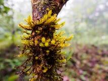 Korstmos op boom in tropisch regenwoud Stock Afbeeldingen