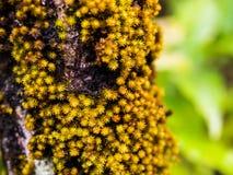 Korstmos op boom in tropisch regenwoud Stock Foto