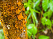 Korstmos op boom in tropisch regenwoud Royalty-vrije Stock Afbeelding