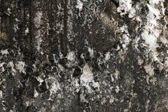Korstmos op de oude muur Royalty-vrije Stock Afbeeldingen
