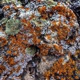 Korstmos op een rots Royalty-vrije Stock Foto's