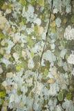 Korstmos op rots Stock Afbeelding